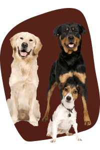 Group Classes Dog Training