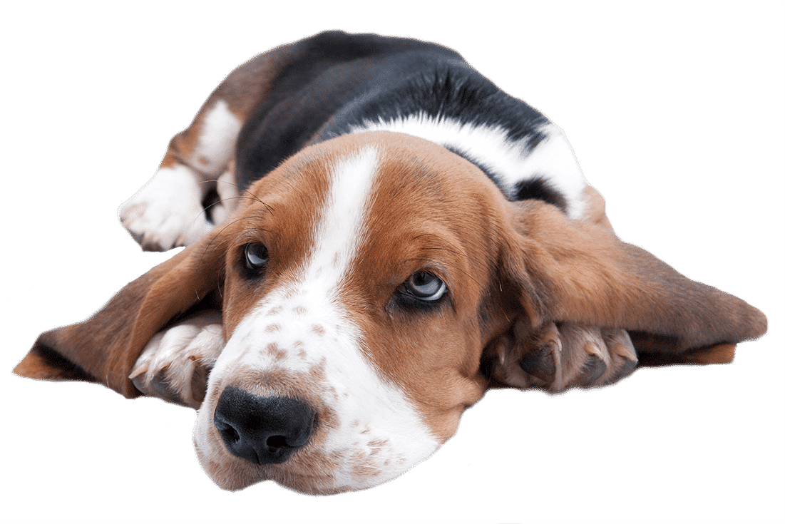 You've Sniffed us out! Pawfect Dogsense Birmingham